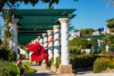 Flower in front of pergola walk in gardens of Kalithea (Rhodes, Greece)
