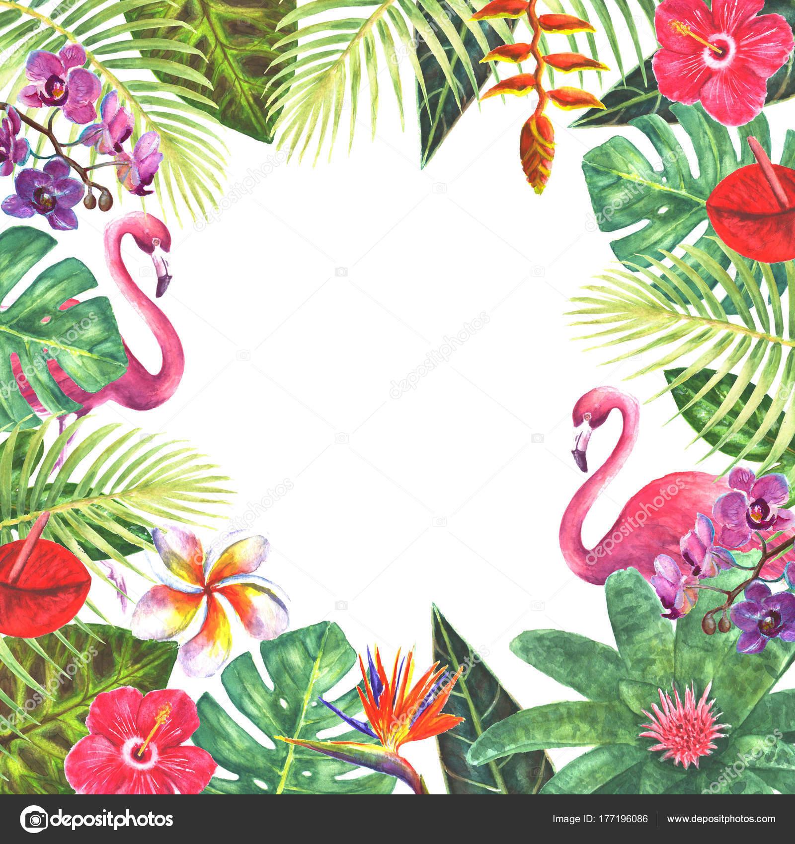 Phalaenopsis orchid flowers border frame decoration ...