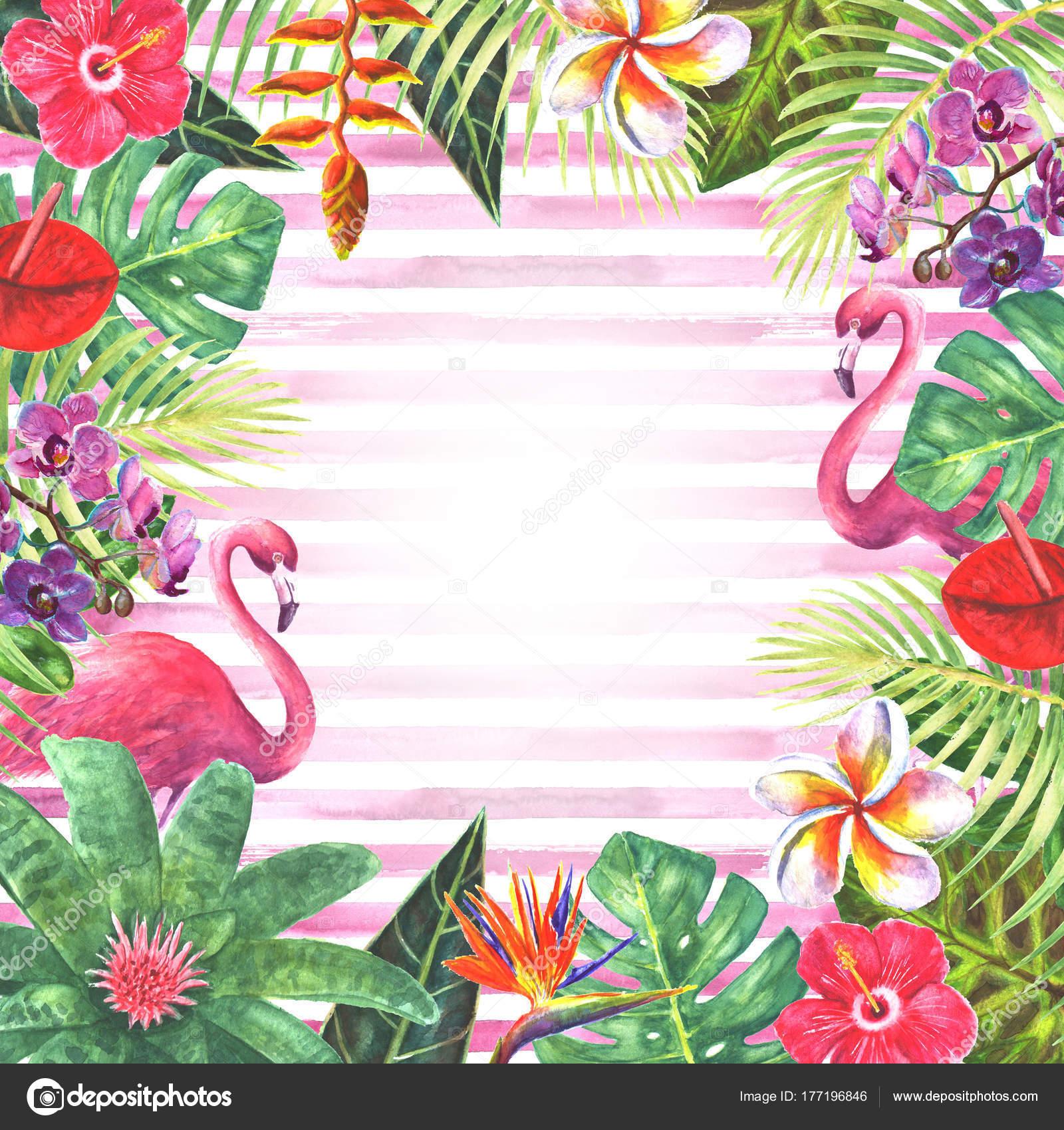 Pink Flamingo Tropical Plants Frame Stock Photo 169 Olgaze