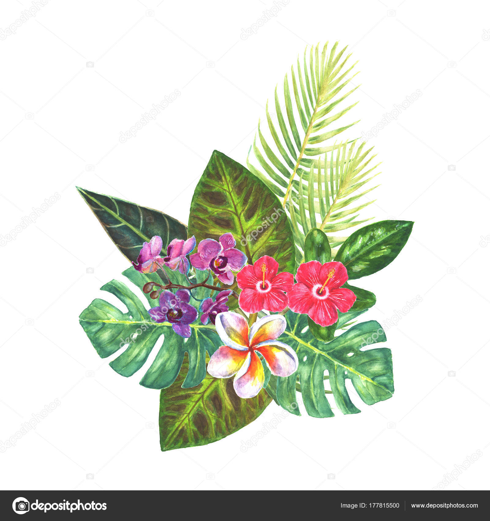 Exotic tropical flowers bouquet — Stock Photo © OlgaZe #177815500