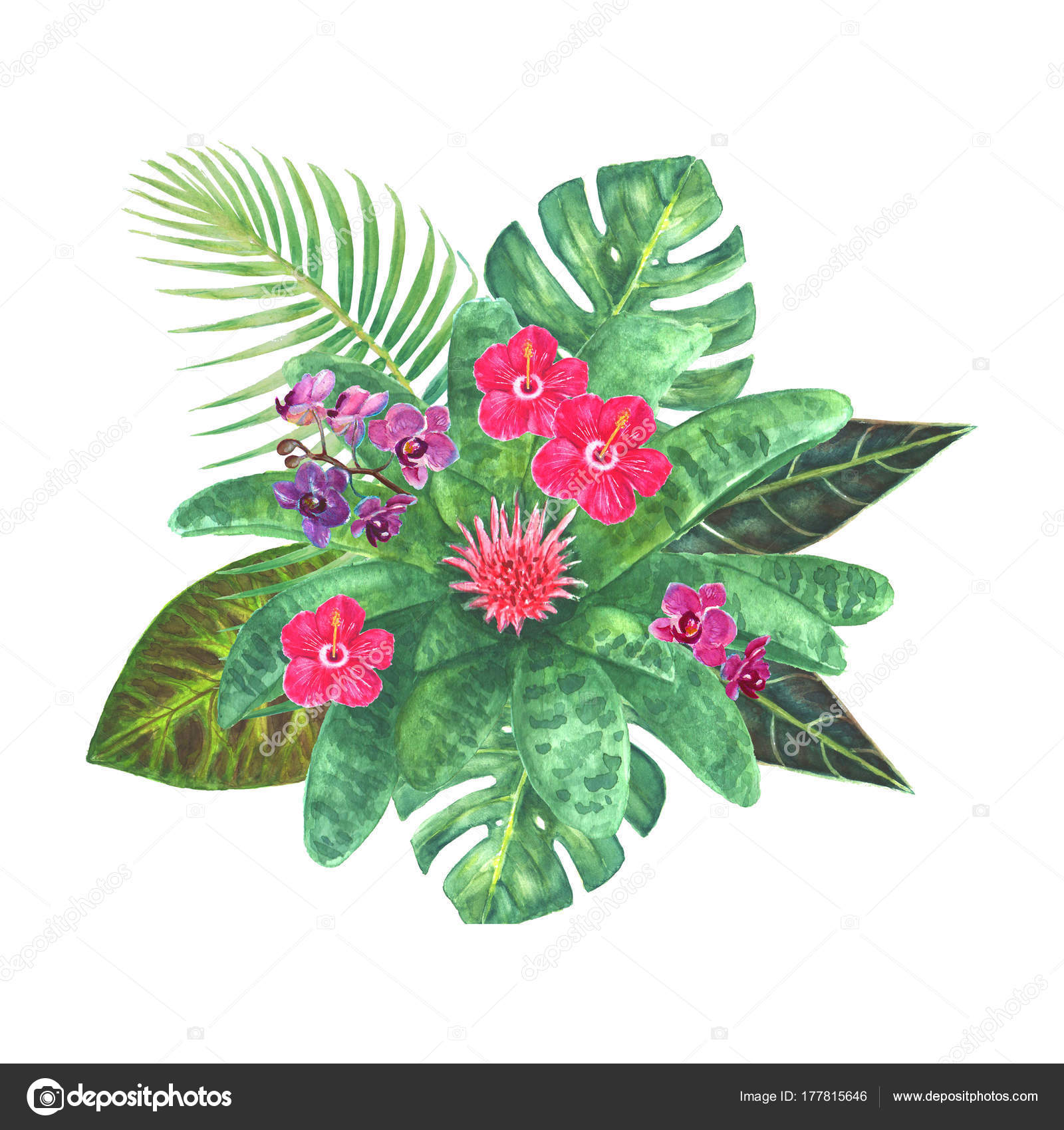 Exotic tropical flowers bouquet — Stock Photo © OlgaZe #177815646