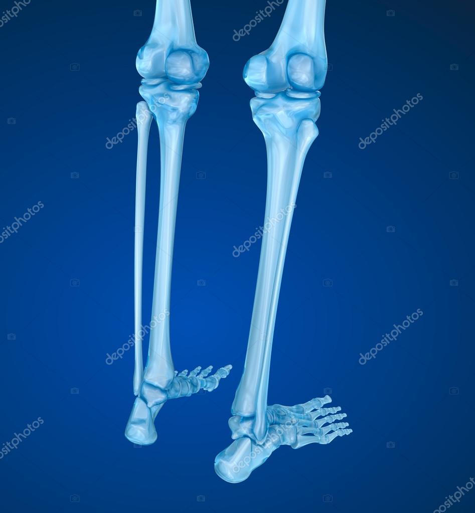 Скелет человека коленный сустав болит сустав кисти правой руки лечение