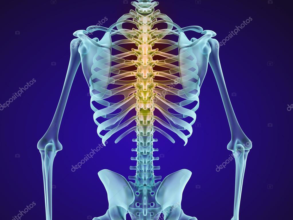 Menschliches Skelett und Wirbelsäule. XRAY-Ansicht. Medizinisch ...