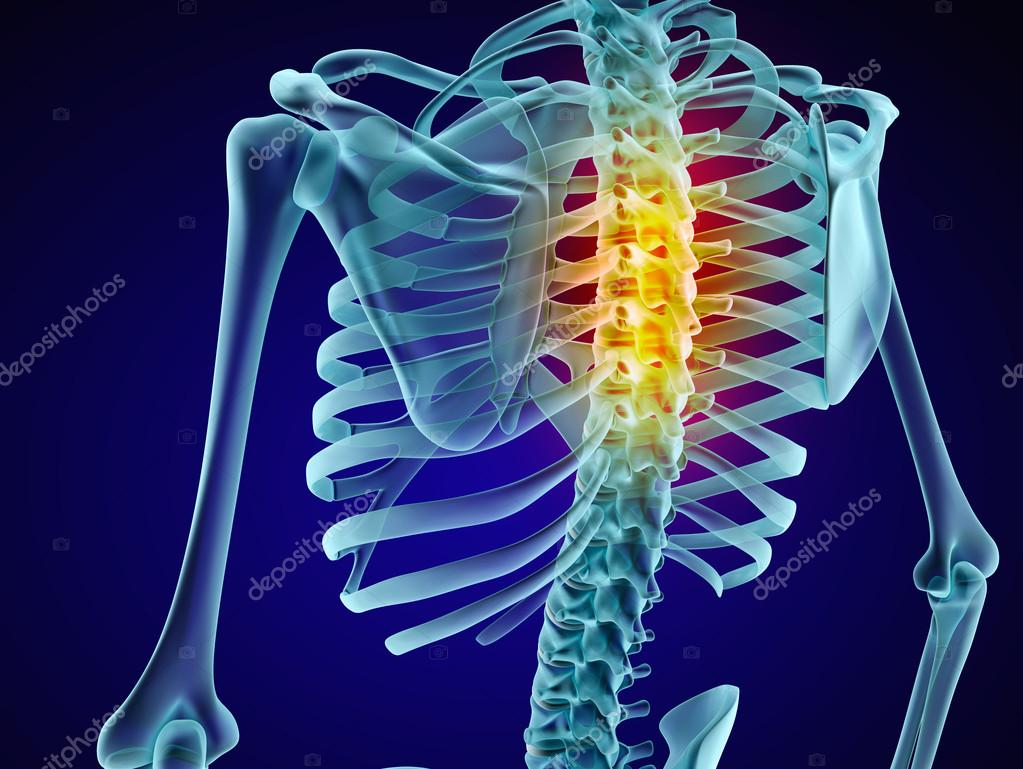 Human skeleton and spine. Xray view. Medically accurate 3D ...