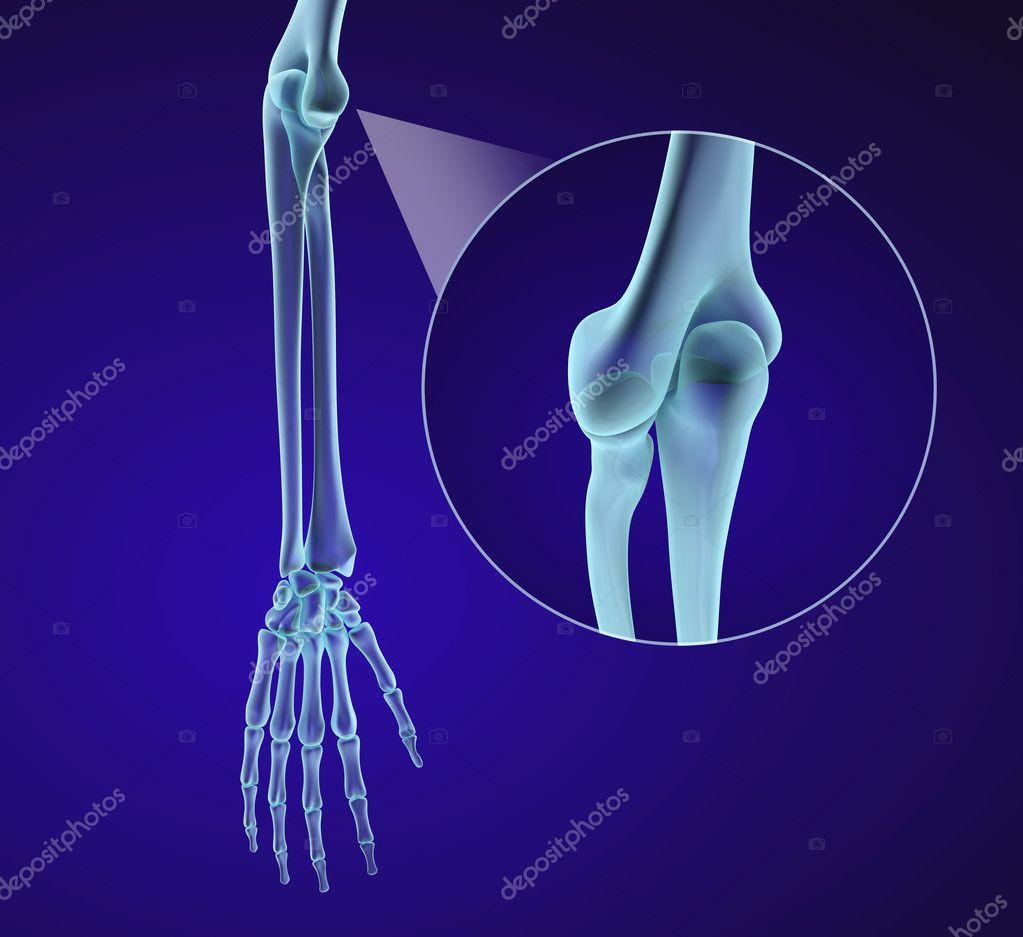 Anatomie der menschlichen Hand. Medizinisch genaue 3D-Illustration ...