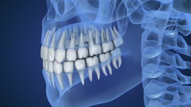 Palella trasparente e denti, vista a raggi x. animazione 3D