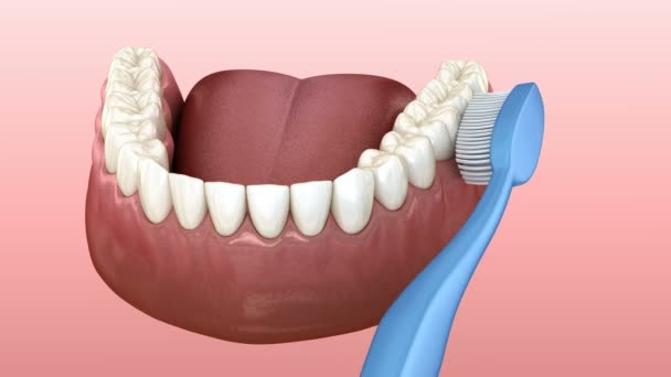 Teeth brushing, cleaning process. Medically accurate 3D animation of oral hygiene.