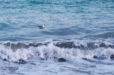 gull floating on the waves of the black sea