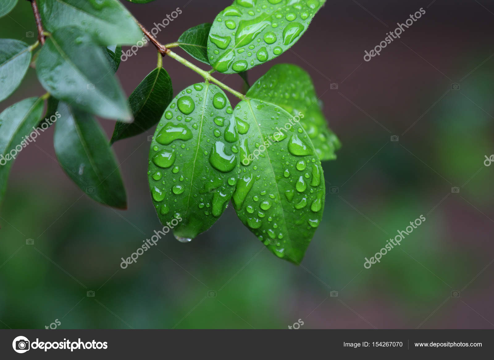 Wet leaves on natural background — Stock Photo © joelfotos ...