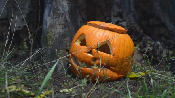 Detailní záběr na strašidelný shnilá dýně s víkem poblíž starou dřevěnou protézu je osvětlena jasným světlem. Detail jack-o lucernou, připravené pro Halloween. Plýtvání potravinami koncepce.
