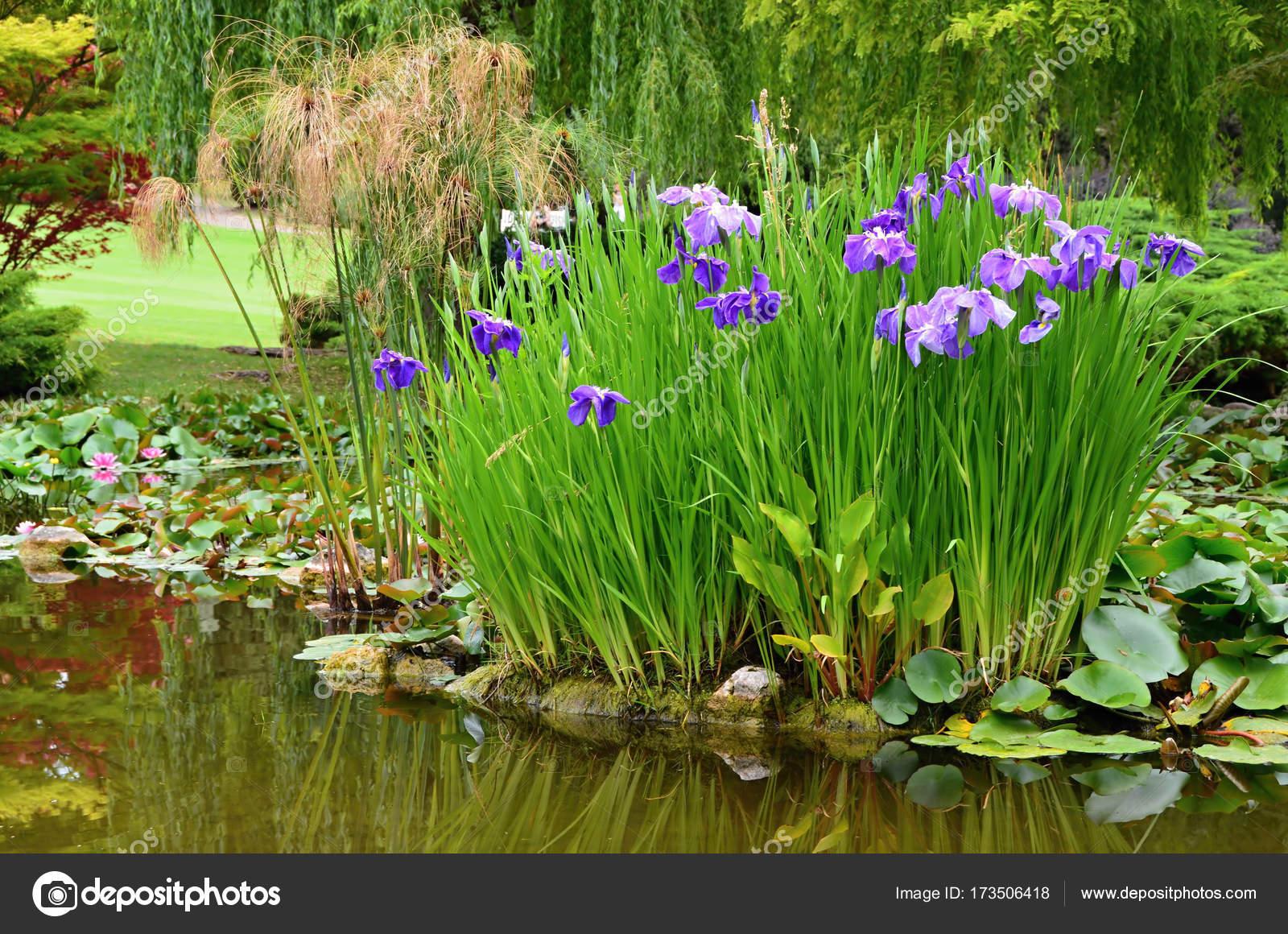 Stagno del giardino con i fiori d 39 acqua foto stock for Stagno in giardino