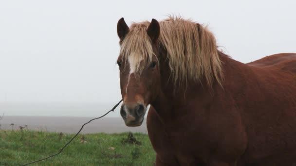 Hnědý kůň kráčí přes pole ve vesnici. Kůň se pásne na zeleném poli s divokými květinami. Zelená louka. Zvířata. 4k