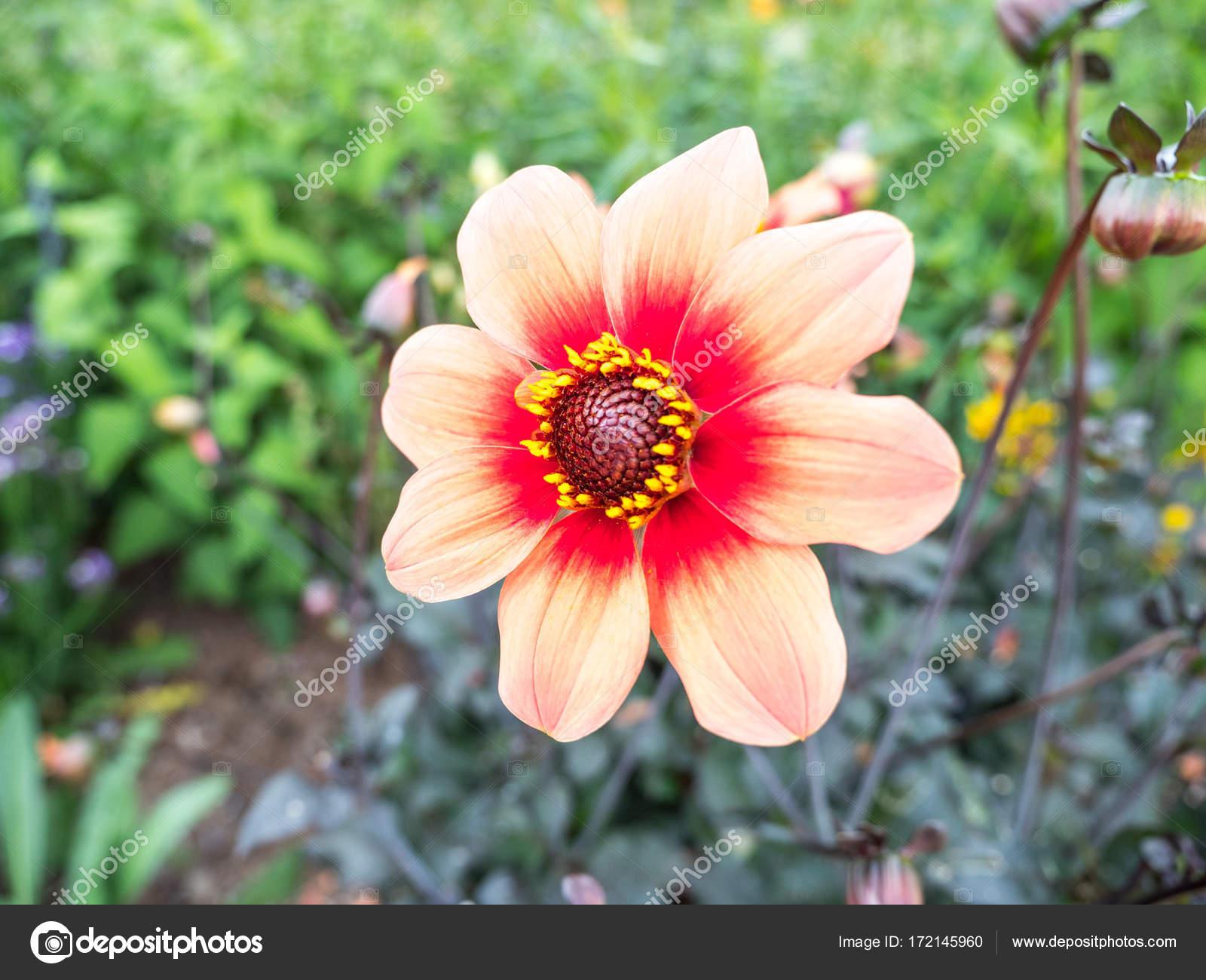 Фото цветка с красным центром 75