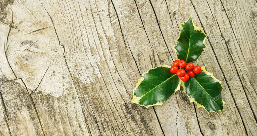 European Holly (Ilex aquifolium), christmas decoration, on woode