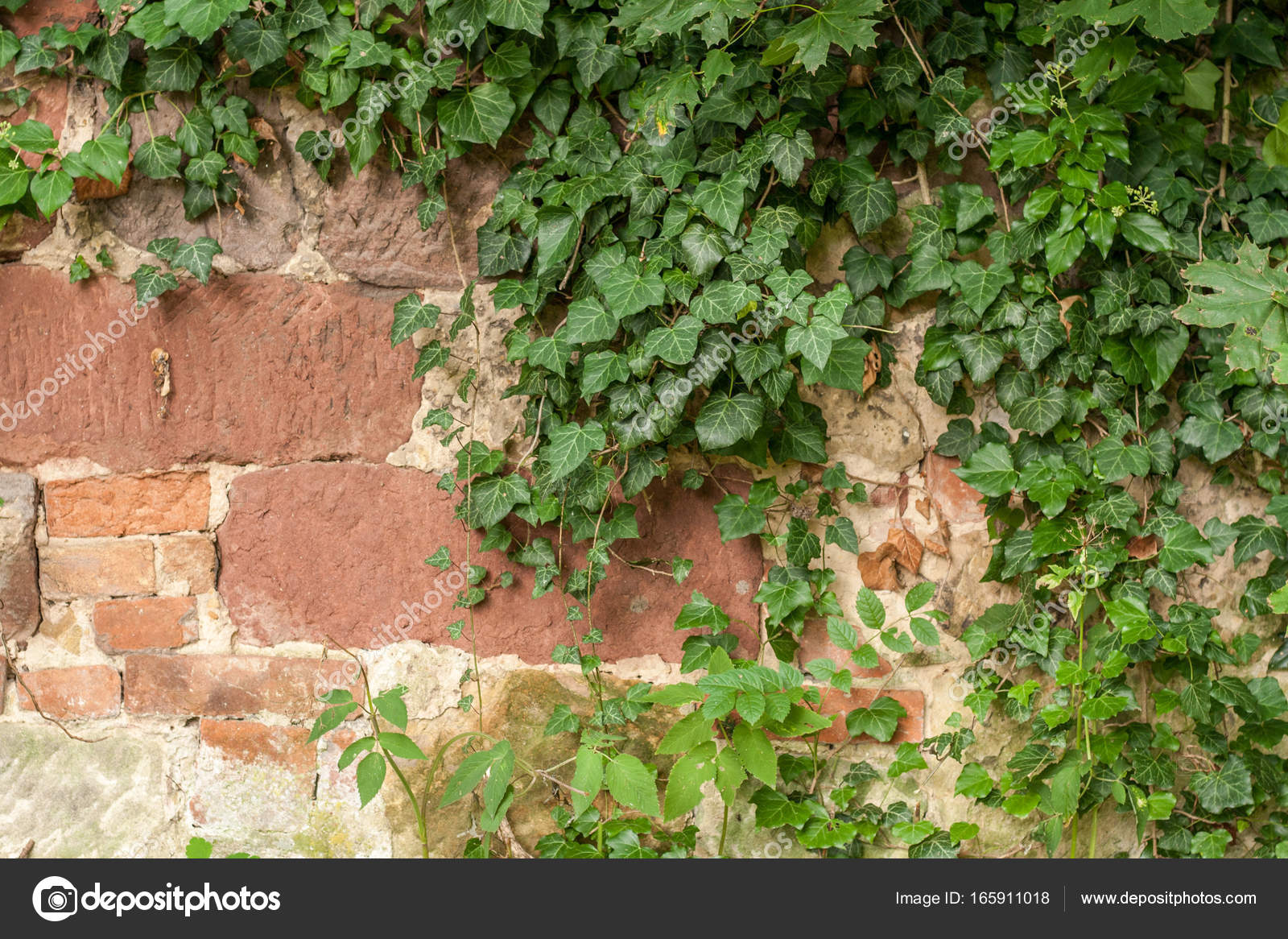 Stone Fence With Creeper Stock Photo C Lubosbrath 165911018