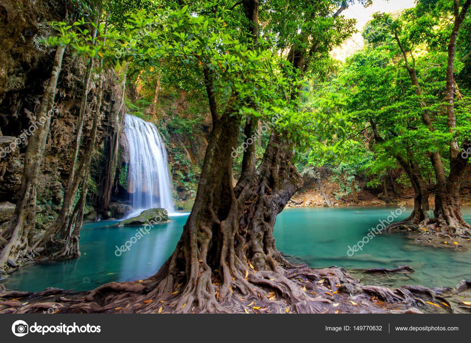 Imágenes: Paisajes De Bosques Lluviosos