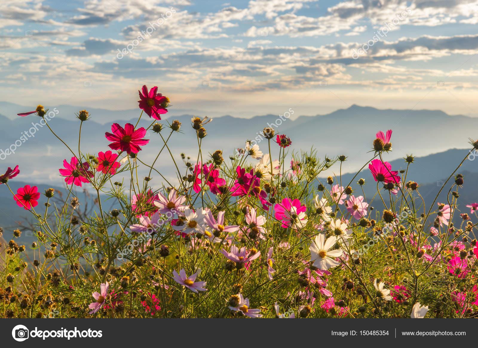De Flores En La Montana: Hermosa Montaña De Doi Luang Chiang Dao En Las Flores