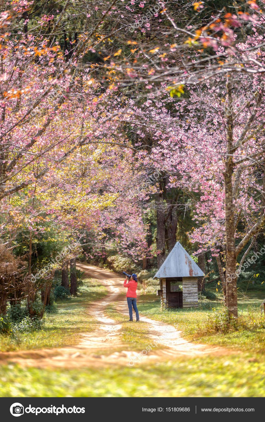 voyageur femme prendre une photo et jouissant dans le jardin de ...