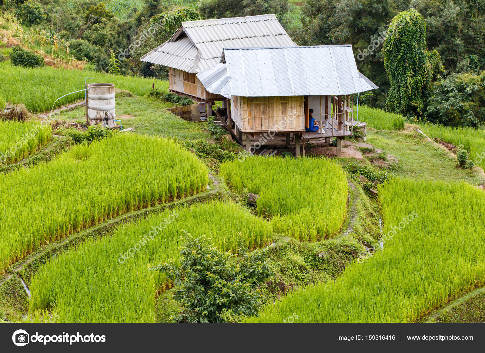 Piccola casa al campo di riso a terrazze verdi in pa pong piang ...