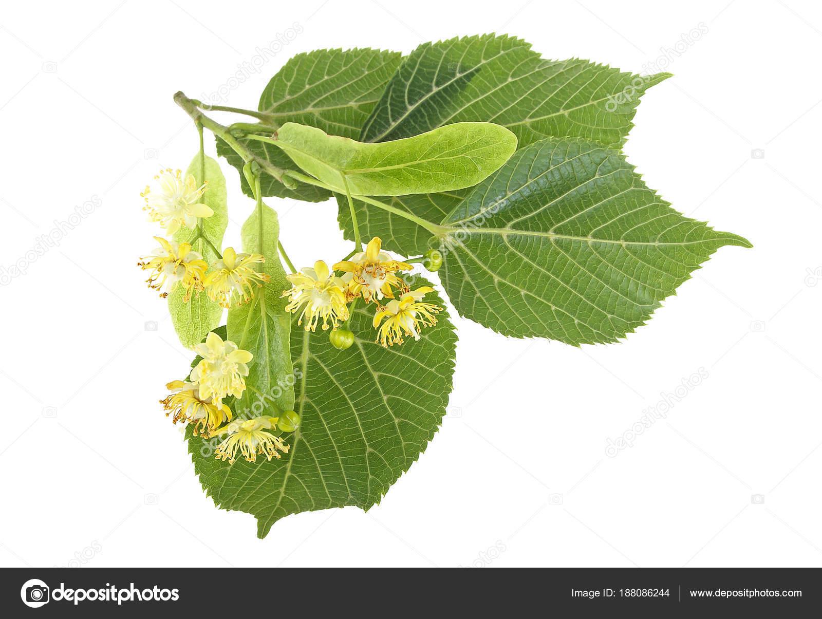 Декоративные цветки из ткани