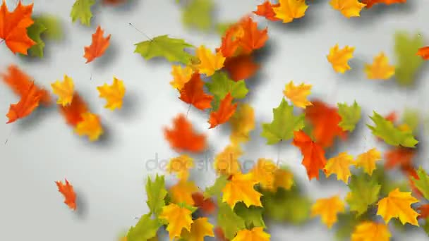 Ősszel, az őszi levelek. Juharfa zöld repülő és körözött. Hurok élénkség.