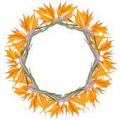 frame of orange flowers Strelitzia