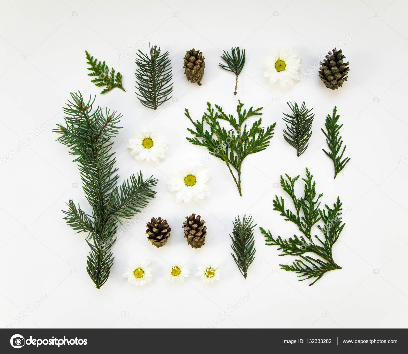 Creative natural layout of winter plants parts on white background creative natural layout of winter plants parts on white background thuja fir tree daisy flower botanic creative set of plants izmirmasajfo Gallery