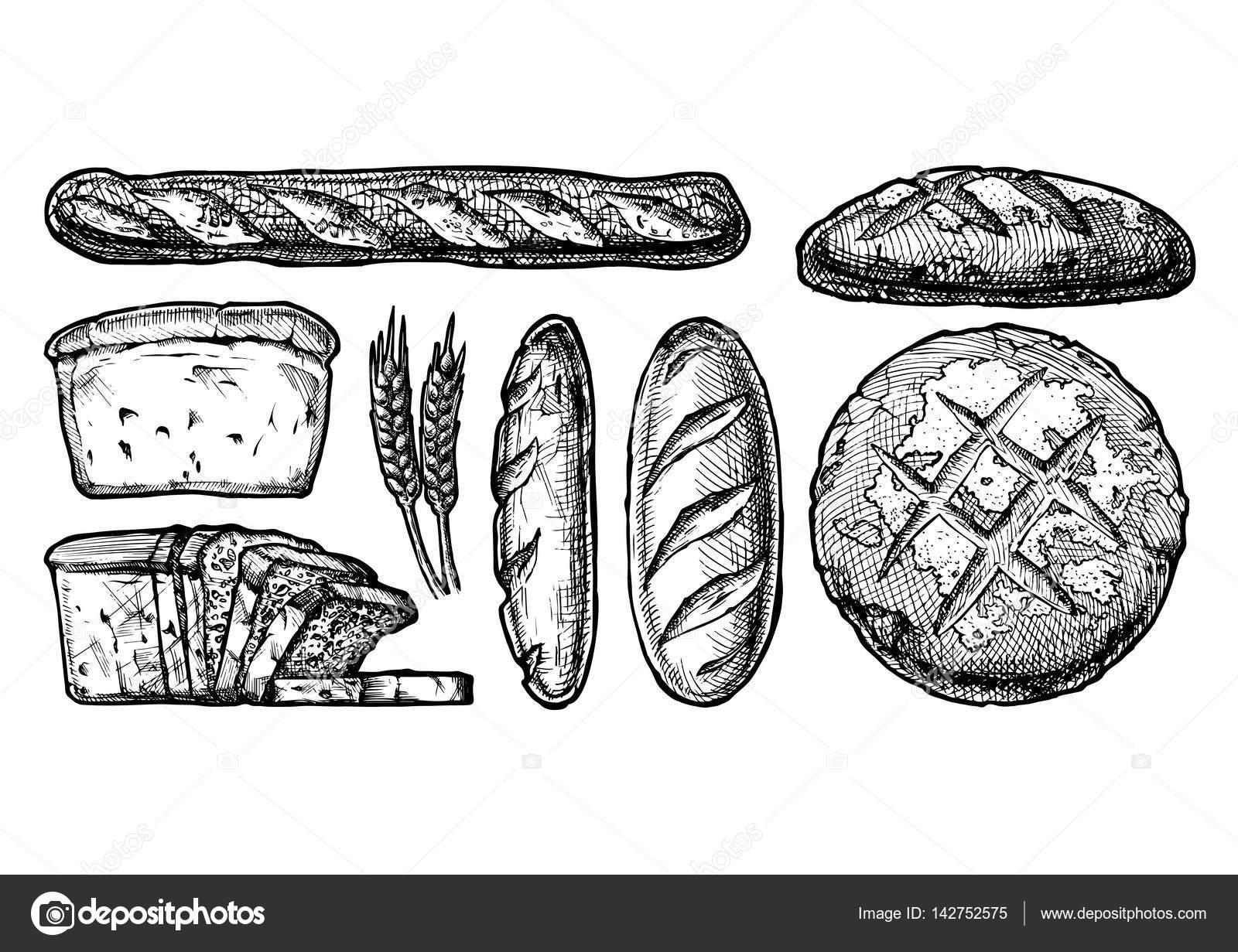 conjunto de diferentes tipos de pan — Archivo Imágenes Vectoriales ...