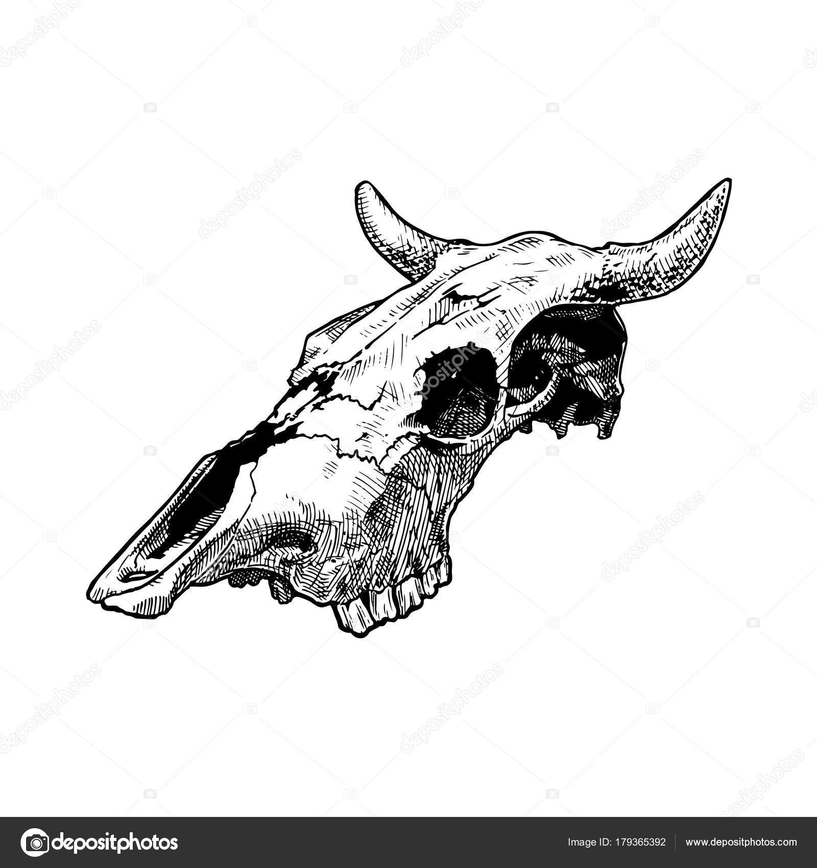 Ilustración del cráneo de Toro — Vector de stock © suricoma #179365392