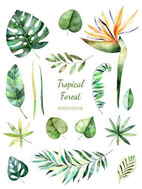 "Картина, постер, плакат, фотообои ""коллекция тропических листьев . "", артикул 149617820"
