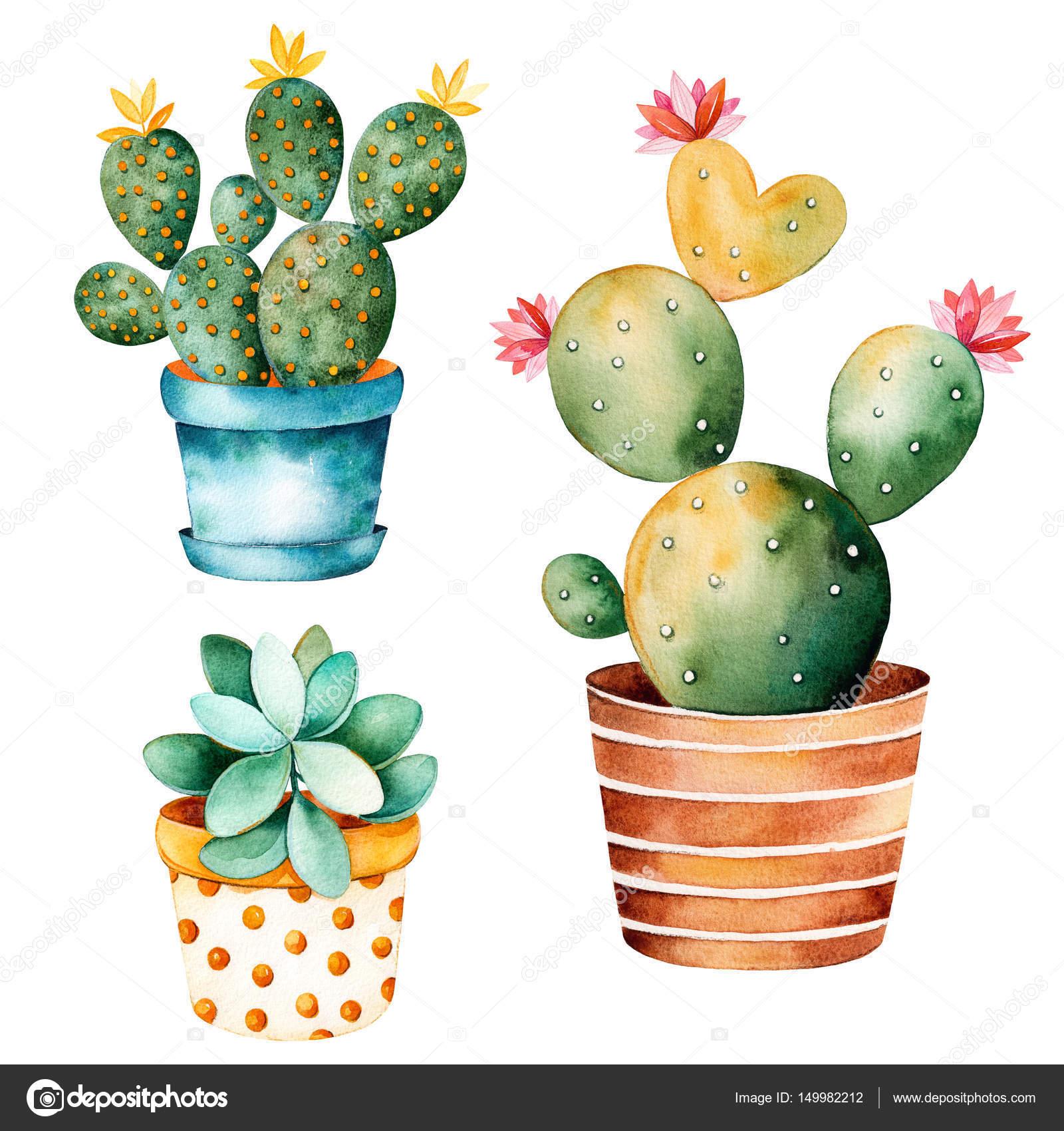 Plante Cactus Aquarelle Peint à La Main Photographie