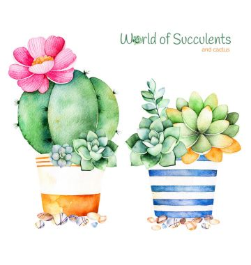 Watercolor handpainted succulent plant