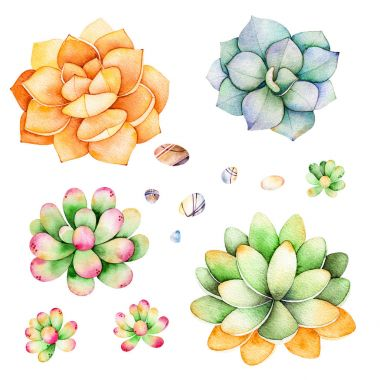 Watercolor collection with succulents plants,pebble stones