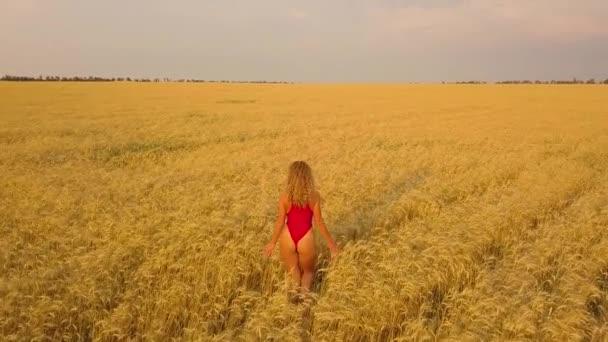 Fiatal gyönyörű lány vörös sétálni mező. Légifelvételek. 4k
