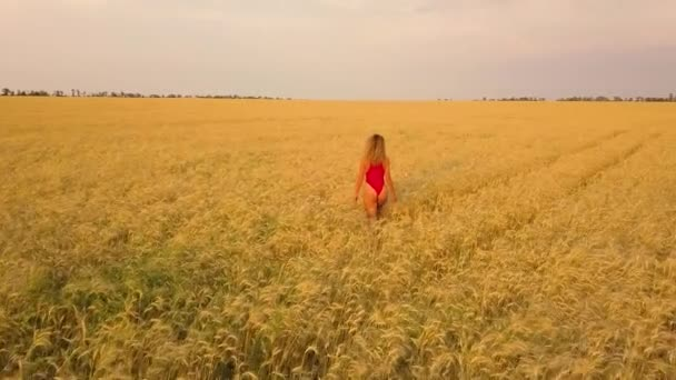 Young beautiful girl in red walking in field. Aerial view. 4K