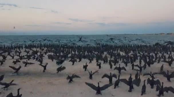 Luftaufnahme. Enten heben ab. Enten an Land. Entenwanderung