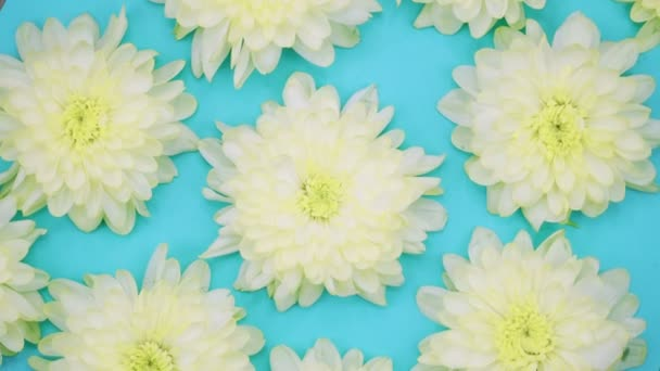 ROTATION: A flowers are rotating on a blue background. Top view
