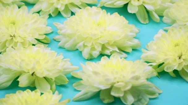 Rotace: Květiny se otáčejí na modrém pozadí. Pohled shora