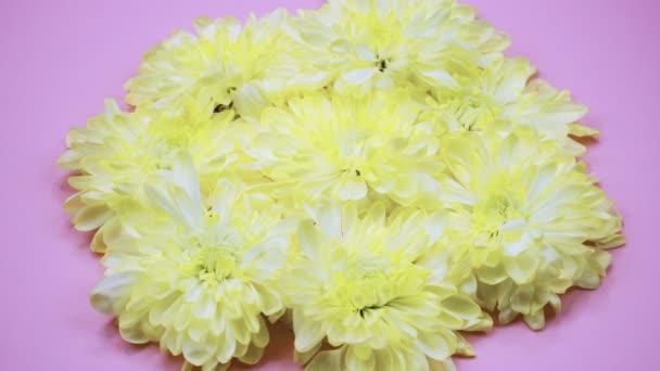 Rotace: Květiny se otáčejí na růžovém pozadí. Pohled shora