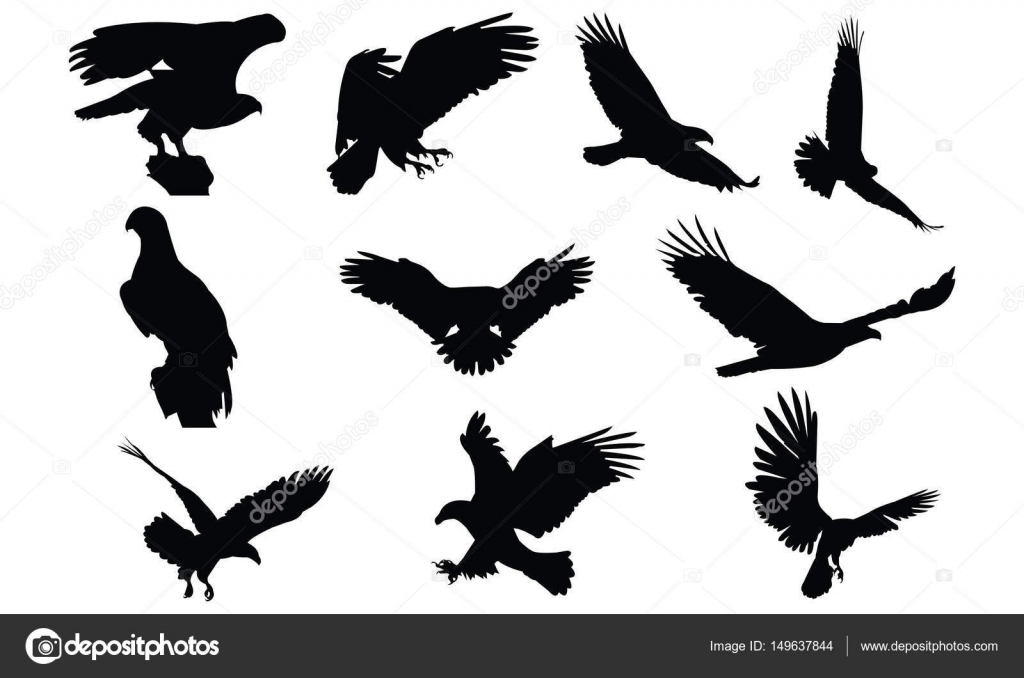 Bald eagle Silhouette vector illustration — Stock Vector ...