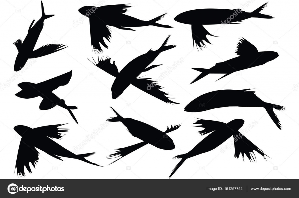 flying fish silhouette vector illustration � stock vector