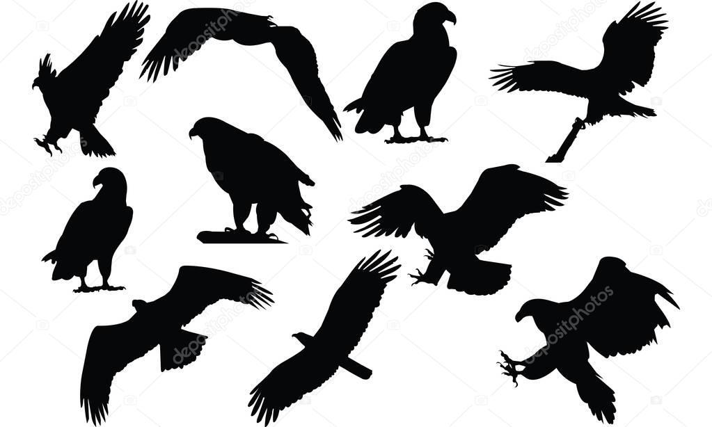 Eagle Silhouette vector illustration