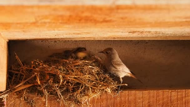 Bird lays eggs in the nest