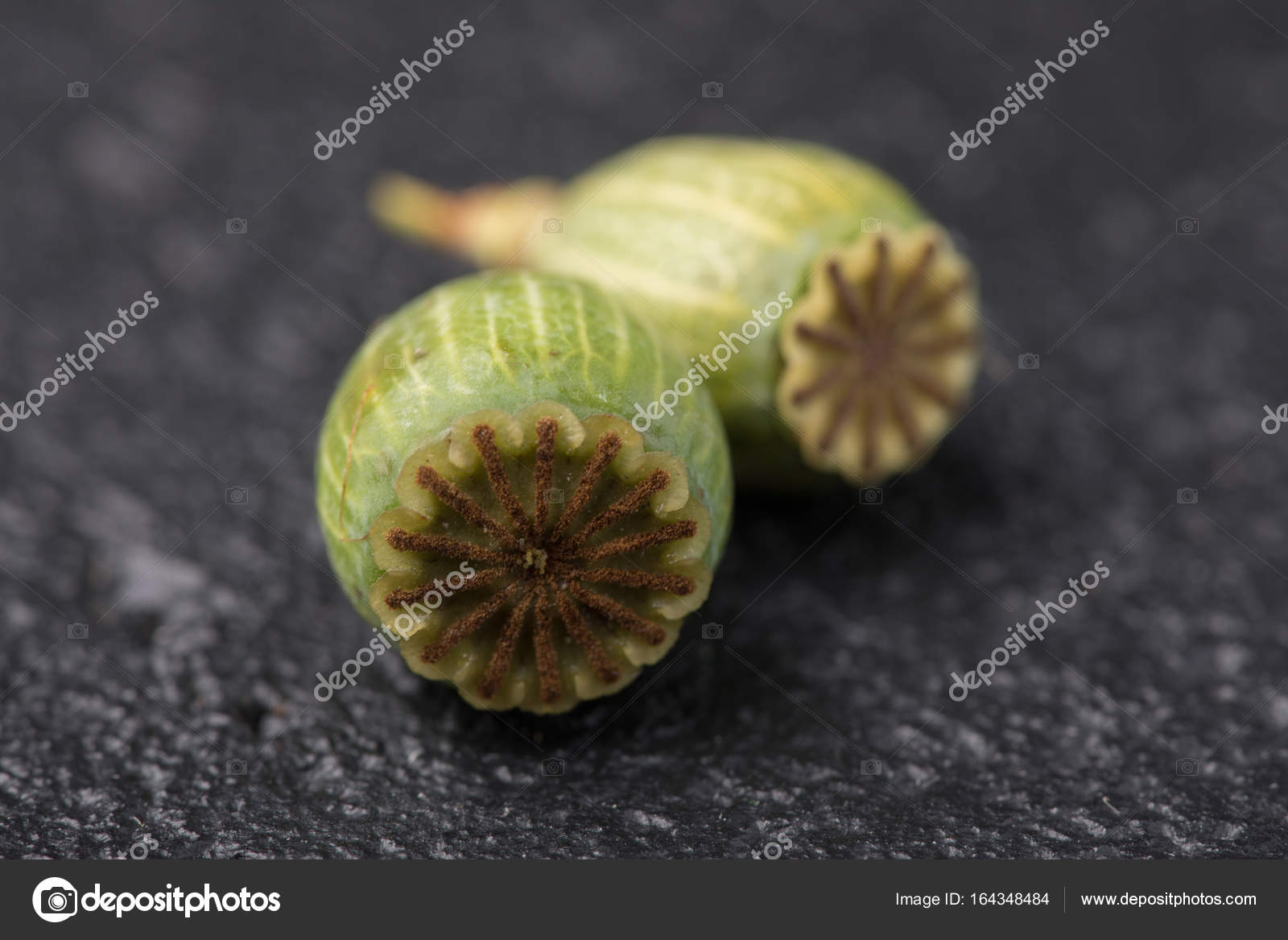 Dry Green Poppy Flower Box Seeds On A Black Background Macro