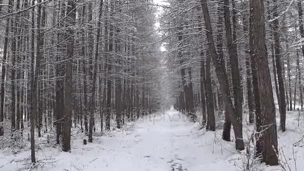 Zimní les během sněžení.