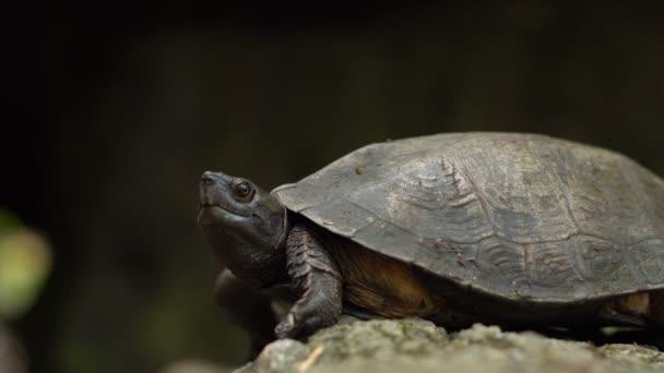 Vad erdőben teknős-tó közelében közel.