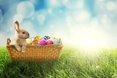 Easter bunny and Easter eggs in basket