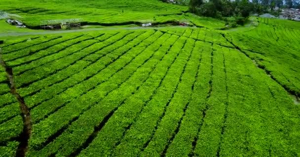 Tea plantation valley at subang highland