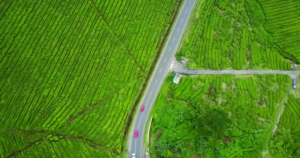 Tea plantation with highway and vehicle