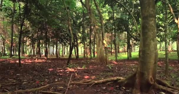 Zelené lesní stromy a slunce